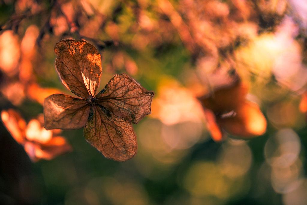 Leaf & Light